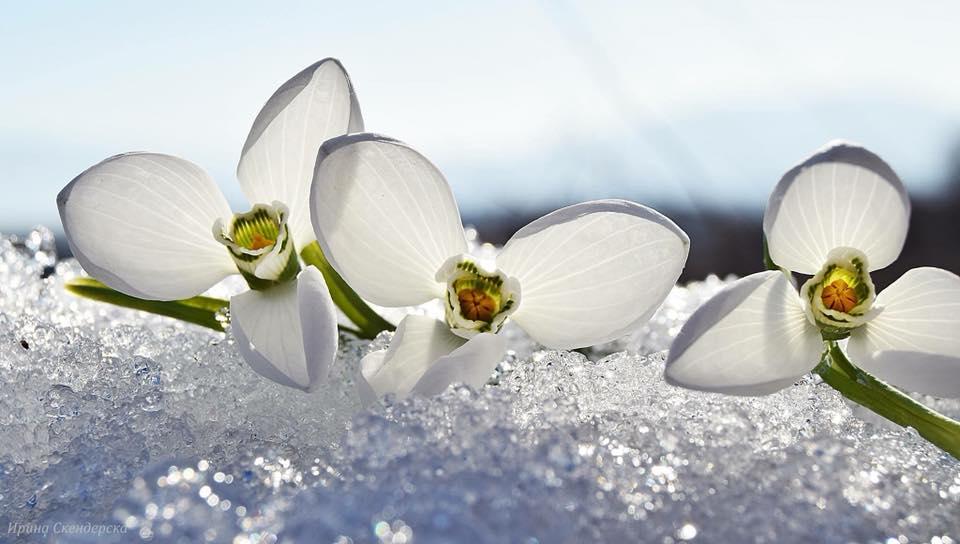 Честита първа пролет! Снимка: Ирина Скендерска