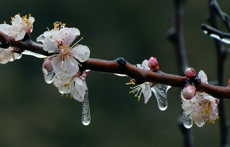Ледена пролет. Снимка: Марияна Върбанова
