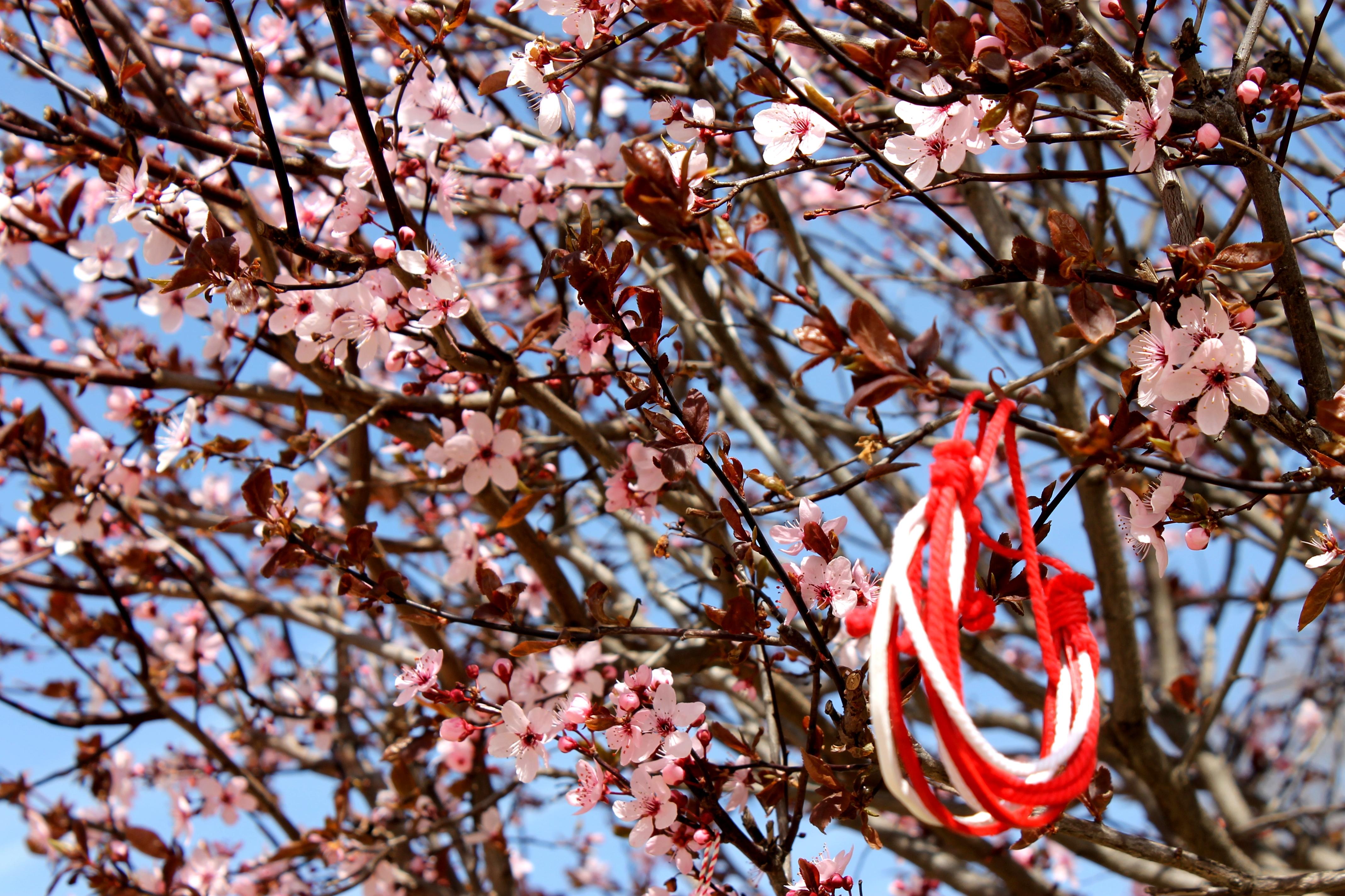 Закъсняла пролет. Снимка: Евгений Георгиев