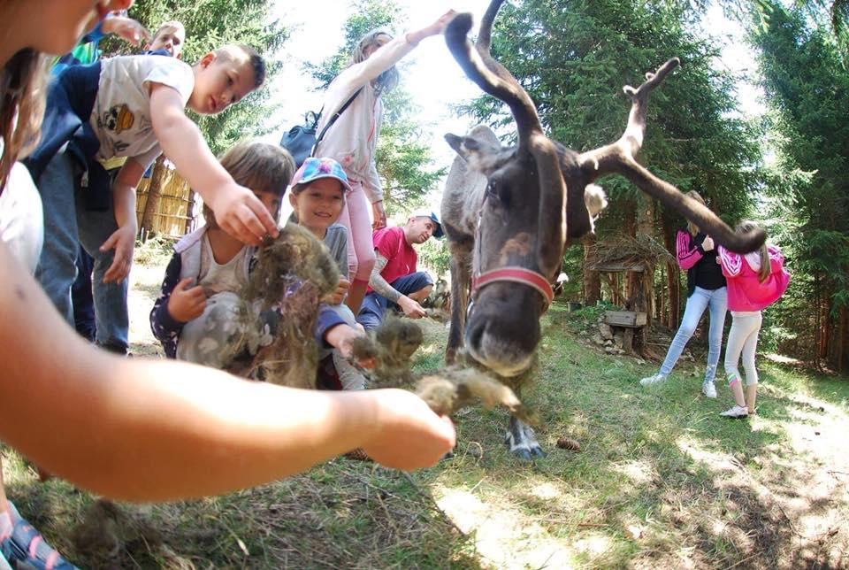 """Татуист от Добрич отглежда северни елени в парк """"Лапландия"""""""