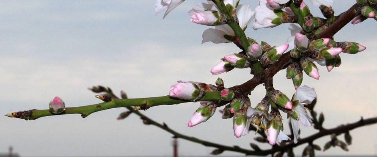Пролет през февруари. Автор: Марияна Върбанова