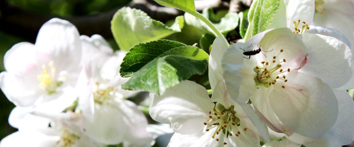 Пролет. Снимка: Мария Георгиева